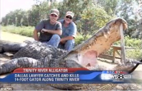 Alternate title: Texas Shark Kills King of the Gators! From The Daily